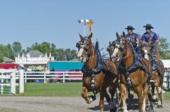 Personas de los caballos de bosquejo belgas en el país justo Foto de archivo libre de regalías
