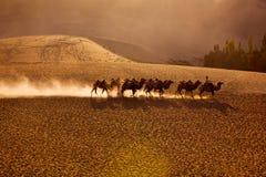 Personas de los camellos en desierto Imágenes de archivo libres de regalías