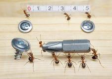 Personas de los trabajos de las hormigas que construyen, trabajo en equipo Imágenes de archivo libres de regalías