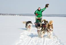 Personas del perro en el trabajo Foto de archivo libre de regalías
