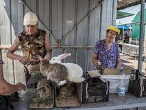Personas mayores que venden conejos vivos en jaulas en el mercado principal de Dniepropetrovsk, slaviansky, durante una tarde cal foto de archivo