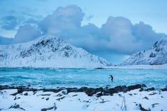 Personas que practica surf del entrenamiento en aguas frías de Lofotens foto de archivo