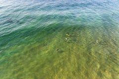 Personas que practica surf del mar de DJI bajas arriba Imagen de archivo libre de regalías