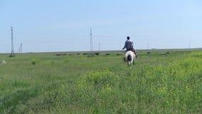 Personenvervoer op een wit paard op gebied stock footage