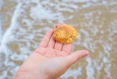 Personhand som samlar havshavskalet med strandvågbakgrund arkivbild