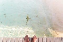 Personlig punkt av sikten av manlig kal fot på en pir med revhajen i vattnet royaltyfri bild