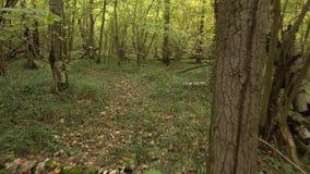 Personligt perspektiv av att gå på en bana på skogen stock video