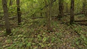 Personligt perspektiv av spring på en bana på skogen stock video