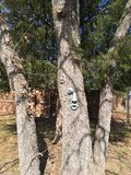 Personnalité des arbres Photo libre de droits