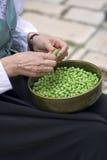 Personne écossant les haricots verts photos libres de droits
