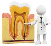 personnes de race blanche 3D. Dentiste avec la section de dent Image stock