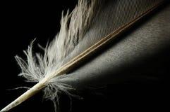 Personne en gros plan de plume d'oiseau Image libre de droits