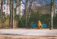 Personne habillée dans un costume d'ours se reposant sur un banc image libre de droits