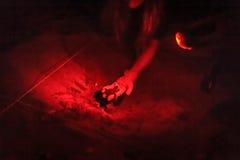 Personne jugeant le hatchling olive de tortue de mer de ridley disponible Photographie stock libre de droits