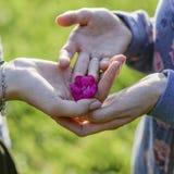 Personne plaçant une fleur dans la paume d'une femme Image stock