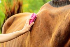 Personne prenant soin de cheval, animal de brossage de toilettage photos stock
