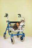 Personnes âgées avec des animaux familiers Image libre de droits