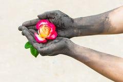 Personnes de jardinage de mains foncées avec des roses Photographie stock libre de droits