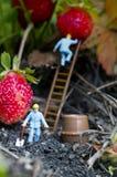 Personnes de jouet recueillant des fraises Image stock