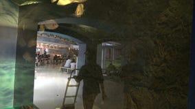 personnes de 4K Asie regardant des poissons nageant dans le petit fron Taïwan d'aquarium d'a clips vidéos