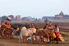 Personnes de tribu d'Intha avec le harnais des ébauches Photos libres de droits