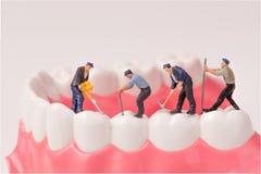 Personnes miniatures et modèle dentaire photo libre de droits