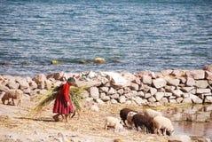 Personnes péruviennes âgées vivant sur le lac Titicaca Photos libres de droits