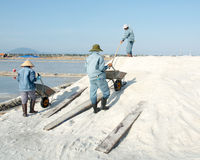 Personnes vietnamiennes travaillant au gisement de sel Image stock