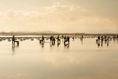 Personnes vietnamiennes travaillant au gisement de sel Images stock