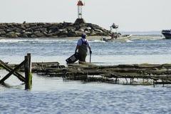 Personostronfiske i den Wellfleet hamnen, Wellfleet, Massachusetts Arkivfoton