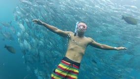 Personsimning bland stimen av stålarfisken tulemben in i Bali, Indonesien arkivfilmer