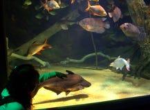 Persoon die van het onderwaterleven genieten stock afbeelding