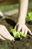 Persoon die zaailing plant Royalty-vrije Stock Afbeeldingen