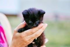 Persoon die zwart katje met blauwe ogen houden Stock Fotografie