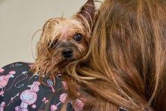 Persoon met een natte hond royalty-vrije stock foto's