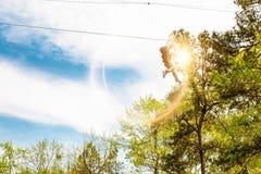 Persoon op Zipline door Bomen Royalty-vrije Stock Foto's