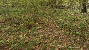 Persoonlijk perspectief van het lopen op een weg bij het bos stock footage