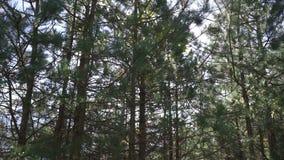 Persoonlijk perspectief van het lopen op een weg in het bos stock videobeelden