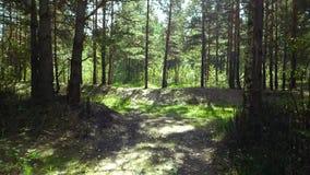 Persoonlijk perspectief van het lopen op een weg in het bos stock footage