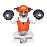 Persoonlijke trainerhond Stock Afbeeldingen