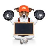 Persoonlijke trainerhond Royalty-vrije Stock Foto