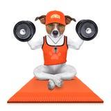 Persoonlijke trainerhond Royalty-vrije Stock Fotografie