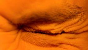 Persoonsschroef omhoog zijn ogen wegens woede of vrees, photophobia, rimpels stock fotografie