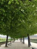 Perspectief in groen Royalty-vrije Stock Afbeelding