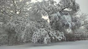 Perspectiva agradable de la visión la nieve en árboles fotografía de archivo
