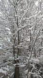 Perspectiva agradable de la visión la nieve en árboles Imágenes de archivo libres de regalías