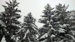 Perspectiva agradable de la visión la nieve en árboles foto de archivo libre de regalías