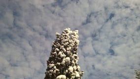 Perspectiva agradable de la visión la nieve en árboles y el cielo Fotografía de archivo libre de regalías