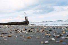 Perspectiva baja de conchas marinas Imagenes de archivo