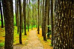 Perspectiva clara das fileiras de ramos de árvore na selva tropical da floresta tropical imagens de stock royalty free